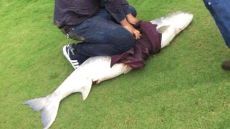 男子钓起巨大鳡鱼 被围观者举报遭处罚