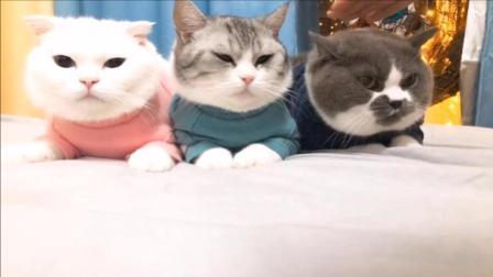 铲屎的拿猫咪拍摄了一个魔性的视频, 三只小猫都好乖呀