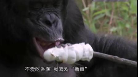 大猩猩不喜欢吃香蕉, 只爱自己生火做饭, 他在中国的话, 就没有主播什么事了