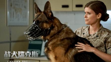 凯特·玛拉新作《战犬瑞克斯》狗狗元素很讨巧 真的很催泪