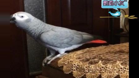 调皮淘气的鹦鹉, 妈妈要打你你以为跟你玩? , 鹦鹉: 抽风啊