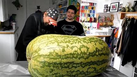 大叔买来一个261斤大西瓜, 切开之后吓趴了, 好吃吗?