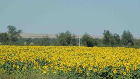 种粮大户纷纷退还流转来的土地, 谁来种地?
