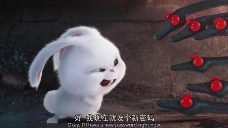 超级萌的兔子竟然是老大: 你们居然敢问兔老大要密码---《爱宠大机密》