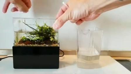 14cm的掌中缸, 究竟怎么换水维护?