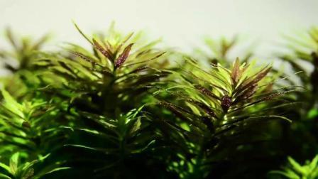 水草造景: 被忽略掉的草缸细节美!