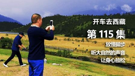 开车去西藏自驾游第115集: 途径鲁朗, 放慢脚步