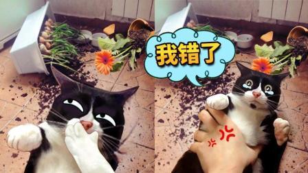 小猫当家闹不停, 分分钟气哭铲屎官! #这! 就是搞笑#