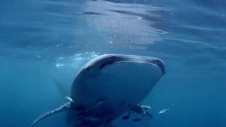 BBC: 海洋中最大的动物是如何生存的?