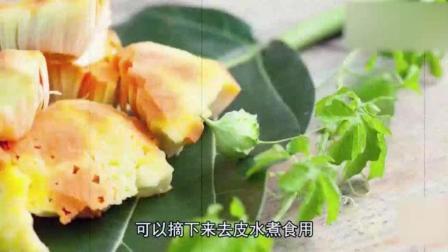 能长出面包的树你见过吗? 一棵树结的果实能养活两个人!
