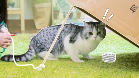 如何用纸箱诱捕喵星人? ! 每天吵着要偷我家猫的人, 你倒是来学下啊?