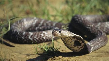 全球十大最恐怖的蟒蛇, 泰坦蟒最长达9米, 森蚺竟然挤不上榜!