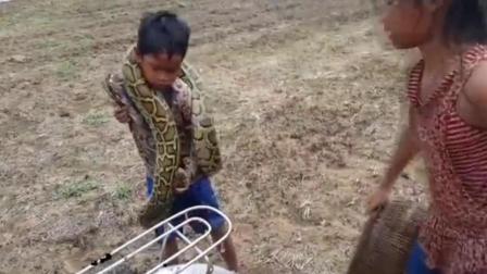 看这外国姐弟两这样抓蟒蛇, 太勇敢了, 过程真是惊心动魄