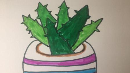 【简笔画27】来画一盆翠绿的芦荟吧!