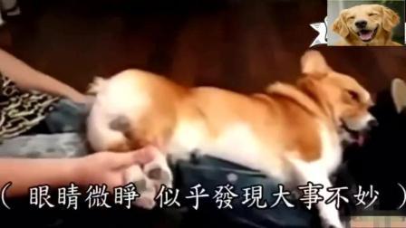 主人趁狗狗睡着时把它的毛发剪了, 狗狗醒来后怒了, 暴揍主人