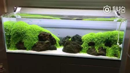 水草造景美景, 水草草缸学习培训找本色水景