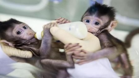 人类和灵长类动物能繁衍出下一代吗? 说出来你都不敢相信