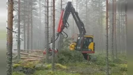 挖掘机被改装成砍树神器, 完全是一条龙服务