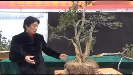 盆景大师王恒亮详细讲解黄杨盆景制作技艺公益讲座(上)