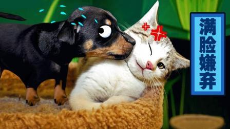 再说一遍! 不正经的动物千万别养! #这! 就是搞笑#