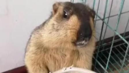 土拨鼠: 这次真是电线先动手的, 你打我干什么嘛?