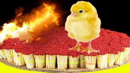 外国小伙用50000根火柴烤鸡吃? 网友: 烤鸡太小, 能烤大象吗?