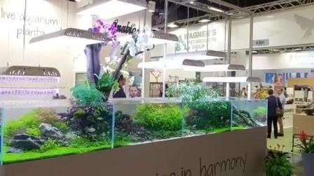 7天造景 德国宠物展4米水草缸