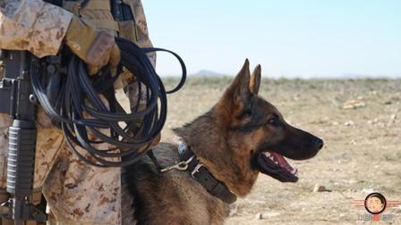 《战犬瑞克斯》狗不在是宠物, 而是与人类并肩作战的战士