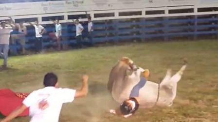 公牛竞技时摔倒重压在骑手身上 送医伤重死亡