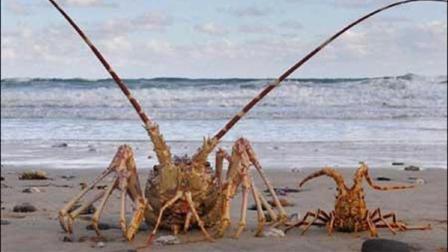 这里人民穷到吃龙虾, 却吃不起米饭, 当地人: 中国人是真朋友