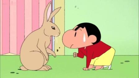 蜡笔小新: 新之助把兔子当狗训练, 结果兔子带着小葵去欺负小新