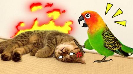 有些鸟, 一看就不是什么好鸟! #这! 就是搞笑#