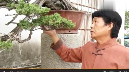 盆景大师王恒亮历经15年制作的柏树盆景赏析