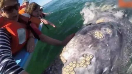 这鲸鱼是怎么了, 真吓人
