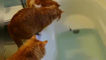 猫咪掉进水里大合集, 反应一个比一个逗, 其中就它最惨!