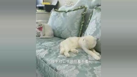 刘二豆趴在沙发上唱歌, 唱的属实有点难听, 最后瓜子的眼神笑喷
