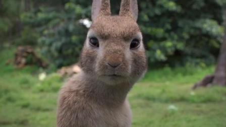 《比得兔》经过专业训练的兔子