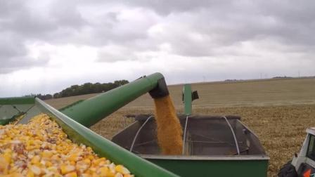 美国玉米为什么这么便宜 看完才明白其中猫腻