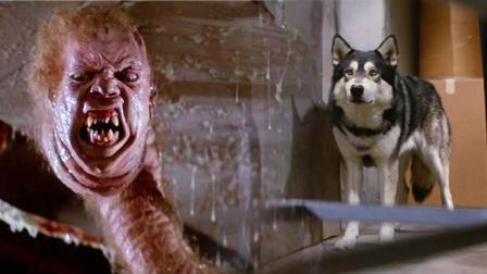 一只流浪狗带来的厄运, 这部电影比《异形》还要恐怖恶心!