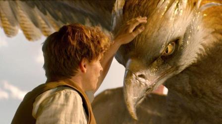 小伙驯服一只千年雷鹰王, 4分钟看完奇幻电影《神奇动物在哪里》