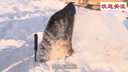 爱斯基摩人外出打猎, 给狗吃海豹肉, 自己吃鲸鱼鳍