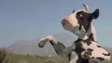 《功夫奶牛》搞笑片段, 奶牛会功夫, 泪奔! !