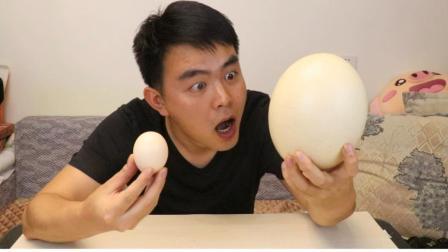 100元一个蛋, 吃完这个鸵鸟蛋, 三个月内我都不想再吃鸡蛋了
