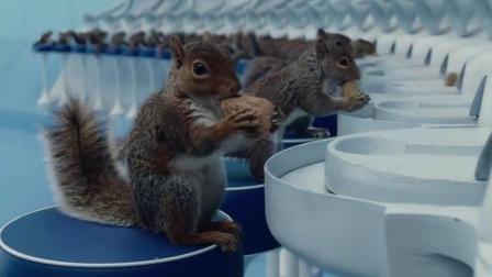 没想到巧克力工厂会雇佣松鼠磕坚果, 生产出来的巧克力, 你敢吃?