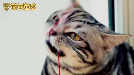 """猫咪兄妹""""荷包鱼旦""""的乱逗生活!"""