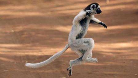 当时我就懵了! 搞笑的动物跳跃失败瞬间!