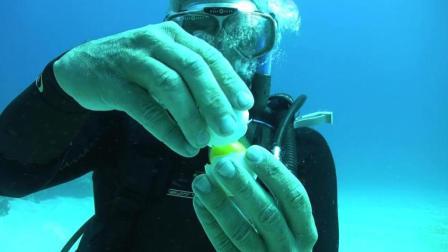 潜水员在20米深海底敲开鸡蛋 出现神奇一幕