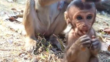 可怜的小猴子 瘦的认心疼!