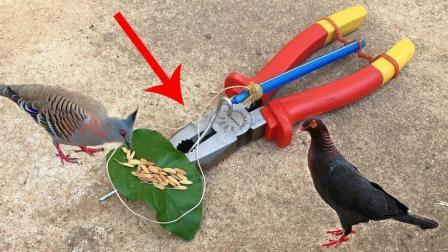 农村小伙自制抓鸟陷阱: 一个钳子、一段皮筋、一支笔, 成功率极高