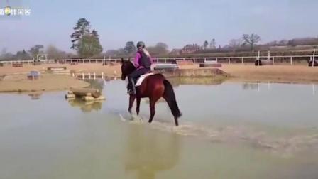 女骑师不幸遇见暗中使坏的小马驹, 惨遭抛出!